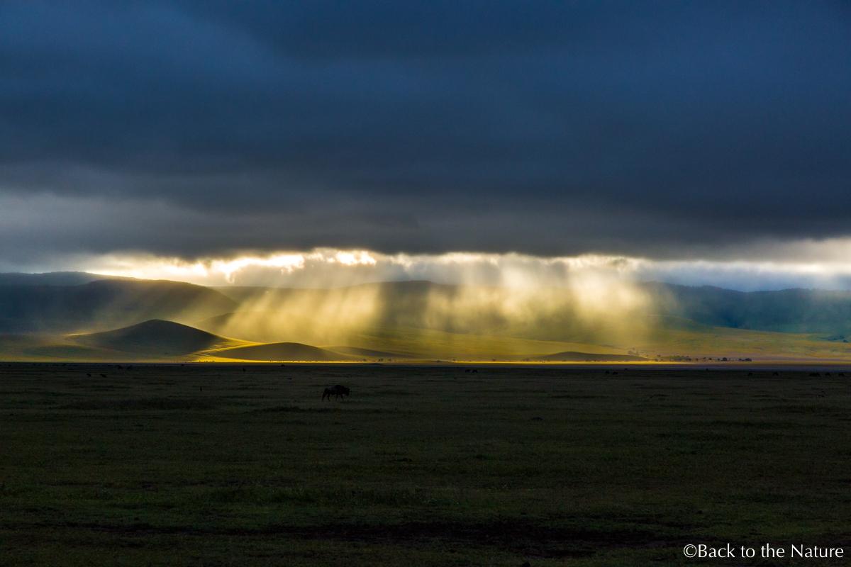 地球最後の楽園!タンザニア ンゴロンゴロ自然保護区で絶景サファリ Tanzania Ngorongoro Safari