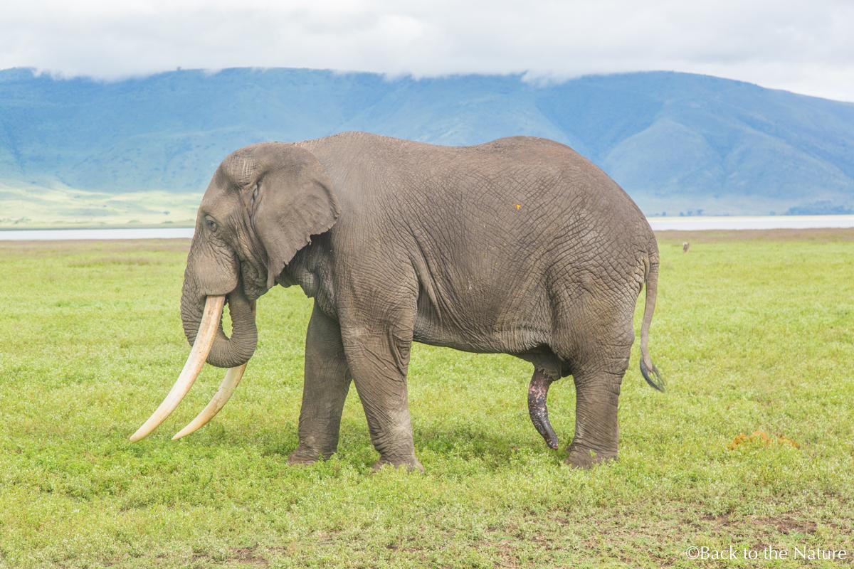 地球最後の楽園!タンザニア ンゴロンゴロ自然保護区で絶景サファリ Tanzania Ngorongoro Safari animal