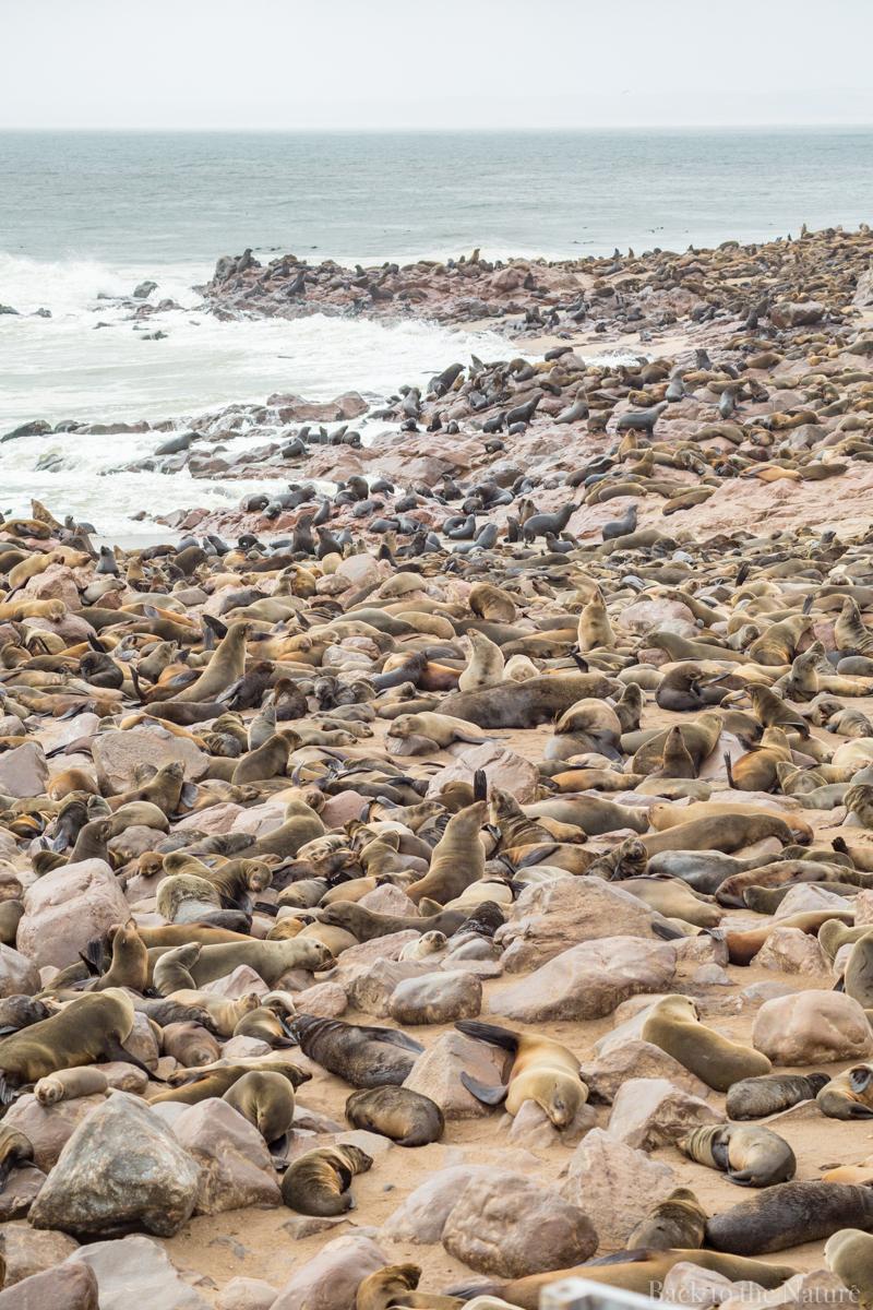 Cape Cross Seal Reserve Namibia Scenery ナミビア ケープクロス シール保護区 オットセイ 絶景 景色