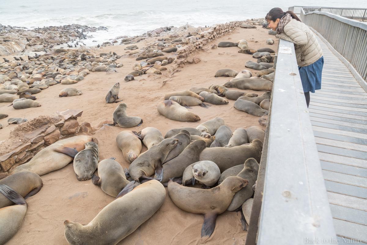 Cape Cross Seal Reserve Namibia Scenery ナミビア ケープクロス シール保護区 オットセイ