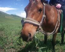 モンゴル大草原の旅 その⑥爽快&壮大!な乗馬体験