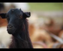 癒されたい人必見!世界一周 × 映像「モンゴル動物編 #2」公開!