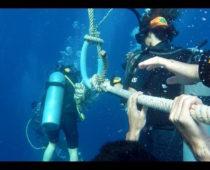 タオ島でダイビング免許!オープンウォーター2日目(海で実習編)