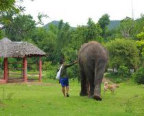 象の保護施設・エレファントワールドでボランティア(その1)