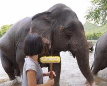 象の保護施設・エレファントワールドでボランティア(その2)