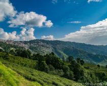 ダージリンの絶景広がる茶畑「ハッピーバレー」へ