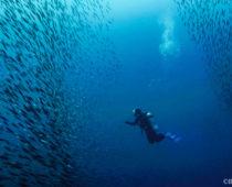 エジプト・ダハブの深さ800mの断崖ダイブで見た水中の絶景