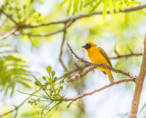 鳥の楽園Ziwayで出会った超可愛い鳥たちと激カワな巣