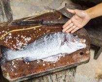 魚も安いぞモザンビーク島!アフリカの秘境島でまさかの鯛茶漬け?!