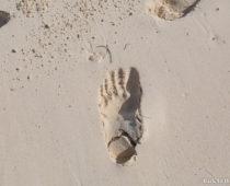 30歳になった翌日、モザンビークの無人島に置き去りにされた