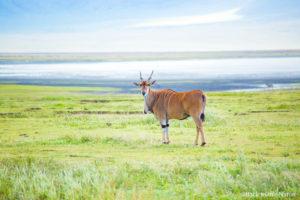 アフリカ・タンザニア・ンゴロンゴロ保全地域でのサファリ Ngorongoro safari Tanzania Africa