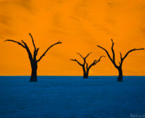 摩訶不思議なナミブ砂漠の絶景!デッドフレイで奇跡の一瞬を切り取る