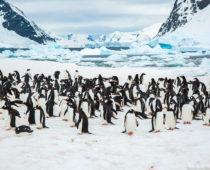 南極珍百景!?ペンギンの大群が宙を舞う!